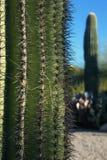 Κινηματογράφηση σε πρώτο πλάνο ενός κάκτου Saguaro Στοκ Εικόνες