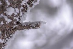 Κινηματογράφηση σε πρώτο πλάνο ενός κλαδιού δέντρων, μεγάλος κλώνος, που καλύπτεται με τον παγετό και το χιόνι με ένα μουτζουρωμέ Στοκ Φωτογραφίες