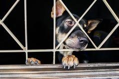 Κινηματογράφηση σε πρώτο πλάνο ενός κλουβιού σκυλιών στοκ εικόνες