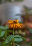 Κινηματογράφηση σε πρώτο πλάνο ενός λουλουδιού Στοκ Φωτογραφίες