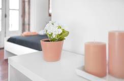 Κινηματογράφηση σε πρώτο πλάνο ενός δοχείου λουλουδιών Στοκ φωτογραφίες με δικαίωμα ελεύθερης χρήσης