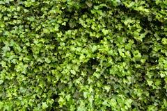 Κινηματογράφηση σε πρώτο πλάνο ενός πράσινου φράκτη Στοκ φωτογραφία με δικαίωμα ελεύθερης χρήσης