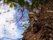 Κινηματογράφηση σε πρώτο πλάνο ενός υποβάθρου κορμών και θαμπάδων δέντρων Στοκ Εικόνες