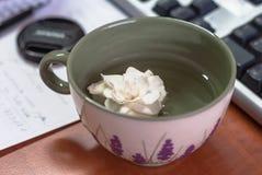 Κινηματογράφηση σε πρώτο πλάνο ενός φλυτζανιού με το άσπρο λουλούδι στο γραφείο στο γραφείο Στοκ Εικόνες