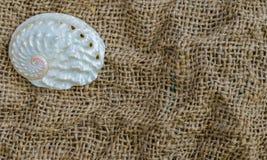 Κινηματογράφηση σε πρώτο πλάνο θαλασσινών κοχυλιών στο λινάρι και διάστημα για το κείμενο Στοκ Φωτογραφίες