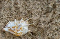 Κινηματογράφηση σε πρώτο πλάνο θαλασσινών κοχυλιών στο λινάρι και διάστημα για το κείμενο Στοκ φωτογραφία με δικαίωμα ελεύθερης χρήσης