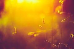 Κινηματογράφηση σε πρώτο πλάνο λιβαδιών χλόης φθινοπώρου με το φωτεινό φως του ήλιου στοκ φωτογραφίες με δικαίωμα ελεύθερης χρήσης