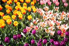 Κινηματογράφηση σε πρώτο πλάνο κήπων λουλουδιών Στοκ εικόνα με δικαίωμα ελεύθερης χρήσης
