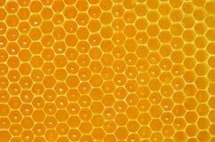 Κινηματογράφηση σε πρώτο πλάνο κυττάρων υποβάθρου που γεμίζουν με το μέλι Στοκ Εικόνες