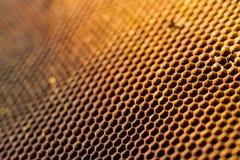 Κινηματογράφηση σε πρώτο πλάνο κυψελωτών κυττάρων από την κυψέλη Στοκ Εικόνα