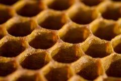 Κινηματογράφηση σε πρώτο πλάνο κυψελωτών κυττάρων από την κυψέλη Στοκ Φωτογραφίες