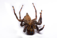 Κινηματογράφηση σε πρώτο πλάνο μιας αράχνης άλματος στοκ φωτογραφίες με δικαίωμα ελεύθερης χρήσης