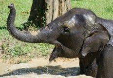 Κινηματογράφηση σε πρώτο πλάνο λουσίματος ελεφάντων στοκ εικόνες