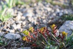 Κινηματογράφηση σε πρώτο πλάνο λουλουδιών βουνών Στοκ εικόνα με δικαίωμα ελεύθερης χρήσης