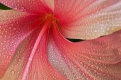 Κινηματογράφηση σε πρώτο πλάνο λουλουδιών Στοκ Φωτογραφία