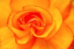 Κινηματογράφηση σε πρώτο πλάνο λουλουδιών Στοκ Φωτογραφίες