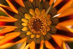 Κινηματογράφηση σε πρώτο πλάνο λουλουδιών στοκ εικόνες