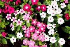 Κινηματογράφηση σε πρώτο πλάνο λουλουδιών Στοκ φωτογραφία με δικαίωμα ελεύθερης χρήσης
