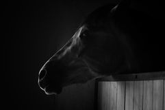 Κινηματογράφηση σε πρώτο πλάνο πορτρέτου αλόγων στο σκοτάδι μονοχρωματικός στοκ εικόνες