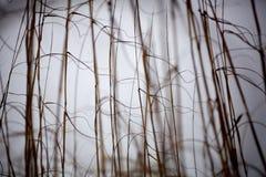 Χλόη 03 παραλιών Στοκ Φωτογραφία