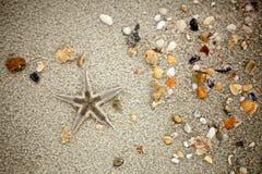 Αστερίας και κοχύλια στην άμμο Στοκ Φωτογραφίες
