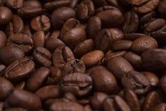 Κινηματογράφηση σε πρώτο πλάνο στα φασόλια καφέ Arabica Coffea Στοκ φωτογραφίες με δικαίωμα ελεύθερης χρήσης