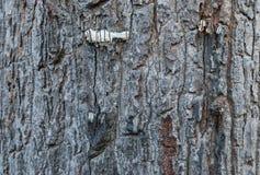 Κινηματογράφηση σε πρώτο πλάνο στην επιφάνεια του παλαιού φλοιού του δέντρου Στοκ φωτογραφίες με δικαίωμα ελεύθερης χρήσης