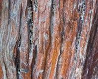 Κινηματογράφηση σε πρώτο πλάνο στο βρώμικο κάθετο παλαιό υπόβαθρο σκληρού ξύλου Στοκ φωτογραφίες με δικαίωμα ελεύθερης χρήσης