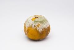 Κινηματογράφηση σε πρώτο πλάνο στο σάπιο πορτοκάλι κακής μυρωδιάς στο άσπρο υπόβαθρο που απομονώνεται Στοκ φωτογραφίες με δικαίωμα ελεύθερης χρήσης