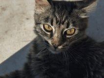 Κινηματογράφηση σε πρώτο πλάνο της γάτας τοποθέτησης Στοκ Φωτογραφίες