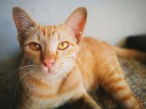 Κινηματογράφηση σε πρώτο πλάνο της γάτας Στοκ φωτογραφία με δικαίωμα ελεύθερης χρήσης