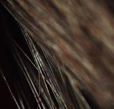 Κινηματογράφηση σε πρώτο πλάνο της καφετιάς τρίχας γατών με τη θαμπάδα Στοκ φωτογραφία με δικαίωμα ελεύθερης χρήσης