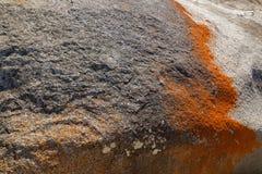 Κινηματογράφηση σε πρώτο πλάνο της κόκκινης πορτοκαλιάς ανάπτυξης λειχήνων στους σχηματισμούς βράχων γρανίτη στοκ εικόνες
