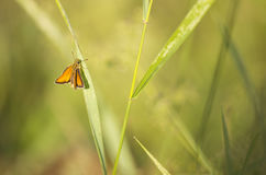 Κινηματογράφηση σε πρώτο πλάνο της πορτοκαλιάς πεταλούδας στοκ εικόνες με δικαίωμα ελεύθερης χρήσης