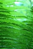 Κινηματογράφηση σε πρώτο πλάνο της πράσινης φτέρης στοκ φωτογραφίες