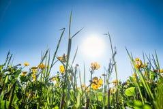 Κινηματογράφηση σε πρώτο πλάνο της χλόης λιβαδιών και των κίτρινων λουλουδιών στοκ φωτογραφία με δικαίωμα ελεύθερης χρήσης