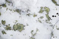 Κινηματογράφηση σε πρώτο πλάνο του άσπρου βράχου με το πράσινη βρύο ή τη λειχήνα Στοκ Εικόνες