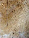 Κινηματογράφηση σε πρώτο πλάνο του ηλικίας ξεπερασμένου ξύλου Στοκ Εικόνες