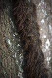 Κινηματογράφηση σε πρώτο πλάνο του κορμού δέντρων Στοκ Φωτογραφία