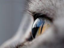 Κινηματογράφηση σε πρώτο πλάνο του ματιού γατών στοκ εικόνα