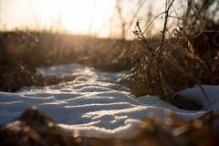 Κινηματογράφηση σε πρώτο πλάνο του μπαλώματος της χλόης χιονιού και λιβαδιών στο ηλιοβασίλεμα Στοκ Εικόνα