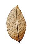 Κινηματογράφηση σε πρώτο πλάνο του ξηρού φύλλου που παρουσιάζει κατασκευασμένες φλέβες Στοκ Εικόνες