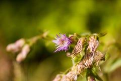 Κινηματογράφηση σε πρώτο πλάνο του λουλουδιού στον τομέα Στοκ φωτογραφία με δικαίωμα ελεύθερης χρήσης