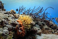 Κινηματογράφηση σε πρώτο πλάνο του πορτοκαλιού, της Ερυθράς Θάλασσας anenome και των διακλαδιμένος σφουγγαριών και του κοραλλιού  Στοκ Εικόνα