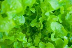 Κινηματογράφηση σε πρώτο πλάνο του πράσινου φύλλου στον κήπο/τη μακροεντολή του πράσινου φύλλου στο δάσος Στοκ φωτογραφία με δικαίωμα ελεύθερης χρήσης