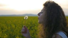 Κινηματογράφηση σε πρώτο πλάνο του σγουρού λουλουδιού πικραλίδων κοριτσιών φυσώντας στο θερινό τομέα ηλιοβασιλέματος σε σε αργή κ φιλμ μικρού μήκους