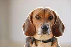 Κινηματογράφηση σε πρώτο πλάνο του σκυλιού Στοκ εικόνες με δικαίωμα ελεύθερης χρήσης