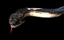 Κινηματογράφηση σε πρώτο πλάνο του τρισδιάστατου φιδιού cobra βασιλιάδων Στοκ Εικόνα