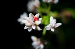 Κινηματογράφηση σε πρώτο πλάνο των άσπρων λουλουδιών στον κήπο/τη μακροεντολή του άσπρου λουλουδιού στο δάσος Στοκ Εικόνες