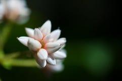 Κινηματογράφηση σε πρώτο πλάνο των άσπρων λουλουδιών στον κήπο/τη μακροεντολή του άσπρου λουλουδιού στο δάσος Στοκ Εικόνα